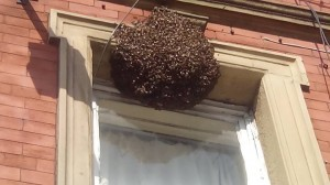 Bee Swarm Goes To The Pub